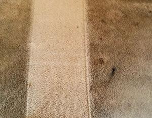 lavado alfombra